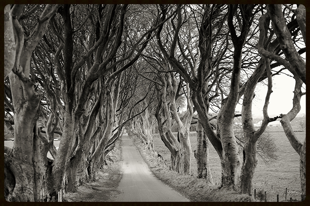 The Dark Hedges(Game of Thrones) in